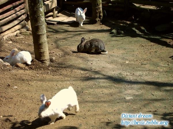 其中有一支黑兔