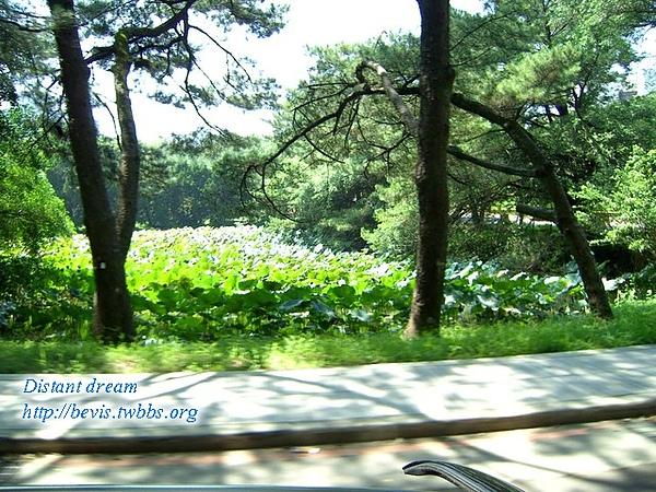 清華大學-荷葉