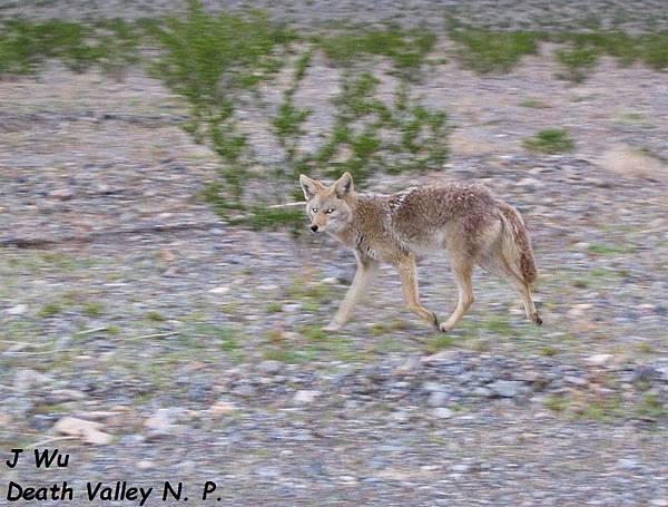 Death Valley NP (23).JPG