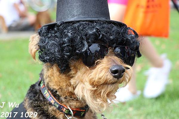 1029 Haute Dog Parade (16).JPG