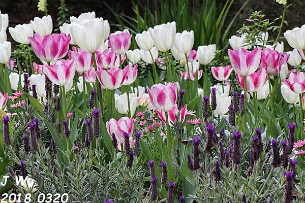 0320 Descanso Gardens (119).JPG