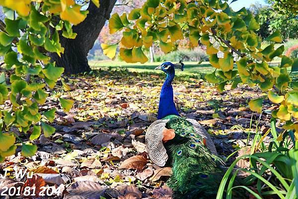 1204 LA Arboretum, DirecTV (36).JPG
