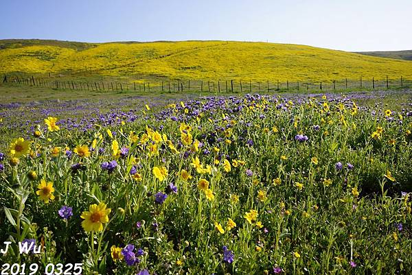 加州野花 Carrizo Plain