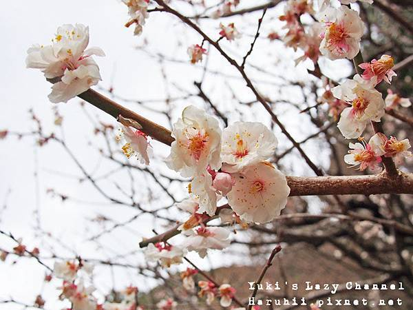 福岡太宰府16