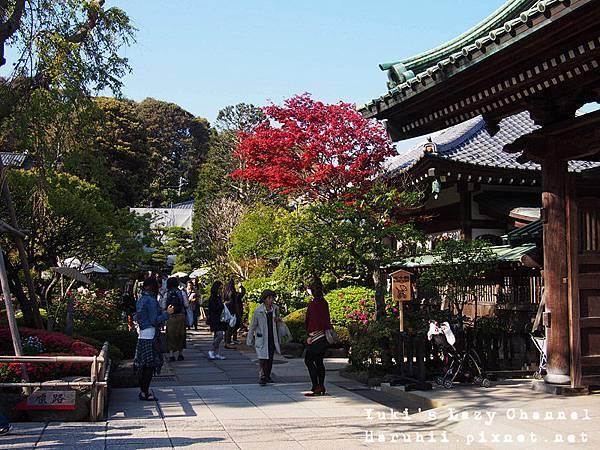 鎌倉長谷寺1
