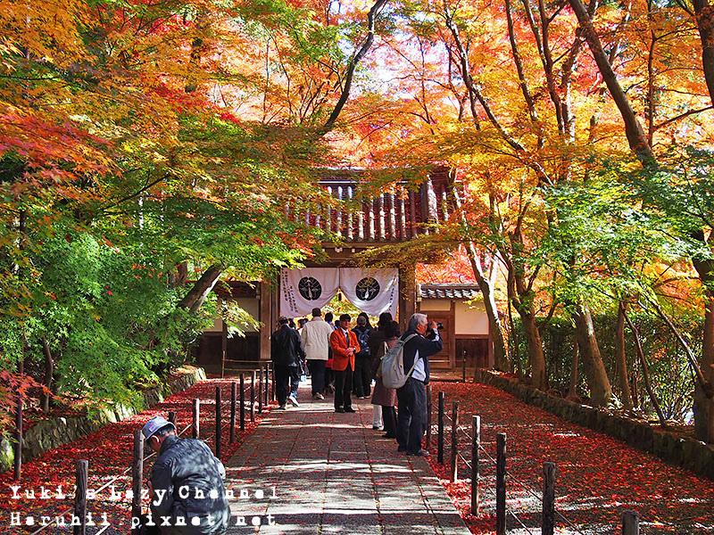 京都長岡光明寺賞楓36