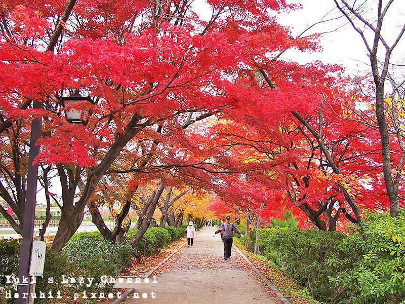 長岡天滿宮賞楓8