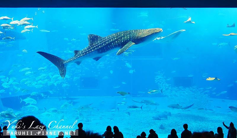 沖繩美麗海水族館沖縄美ら海水族館