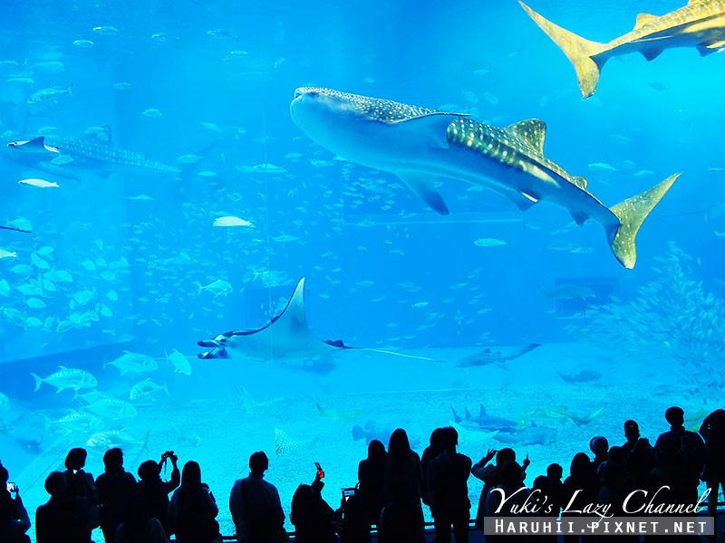 沖繩美麗海水族館沖縄美ら海水族館2