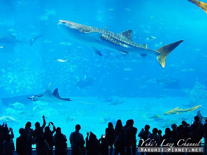 沖繩美麗海水族館沖縄美ら海水族館3