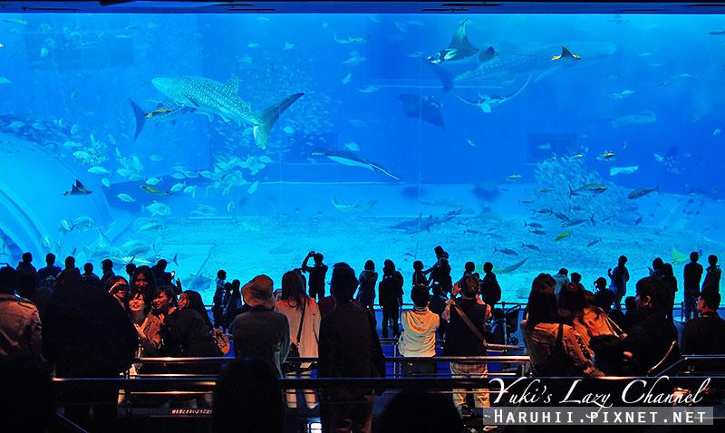 沖繩美麗海水族館沖縄美ら海水族館4