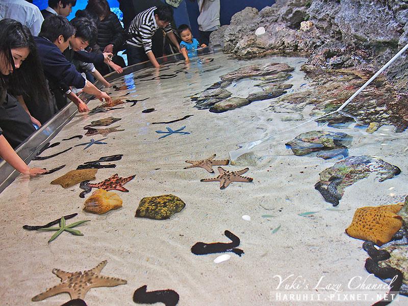 沖繩美麗海水族館沖縄美ら海水族館7