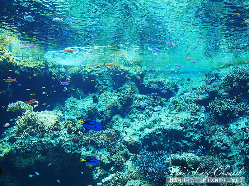 沖繩美麗海水族館沖縄美ら海水族館9