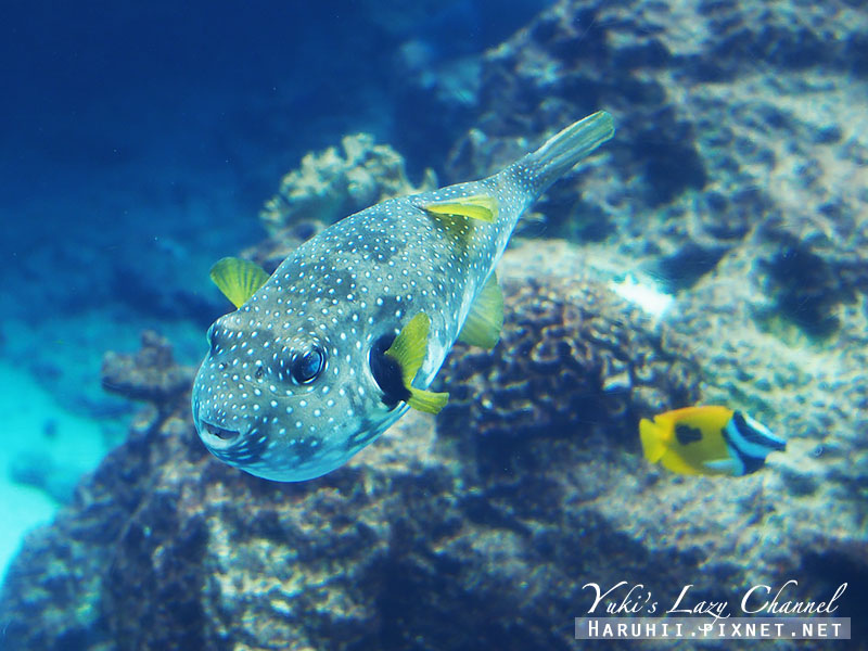 沖繩美麗海水族館沖縄美ら海水族館11