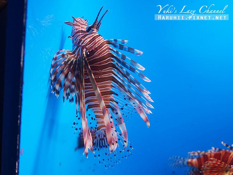 沖繩美麗海水族館沖縄美ら海水族館13