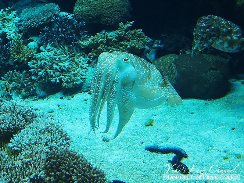 沖繩美麗海水族館沖縄美ら海水族館15