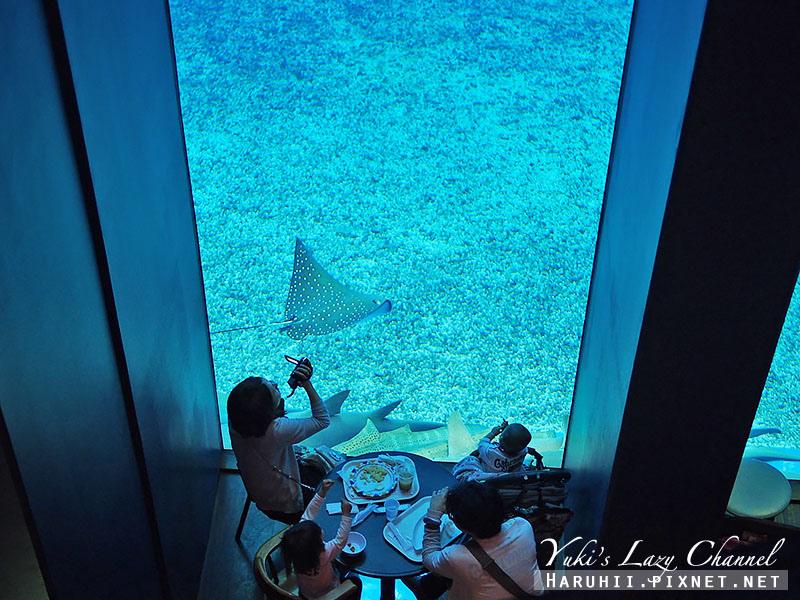 沖繩美麗海水族館沖縄美ら海水族館17