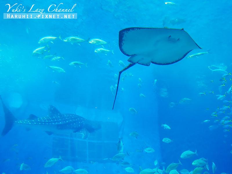 沖繩美麗海水族館沖縄美ら海水族館19