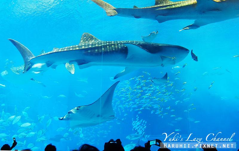 沖繩美麗海水族館沖縄美ら海水族館18