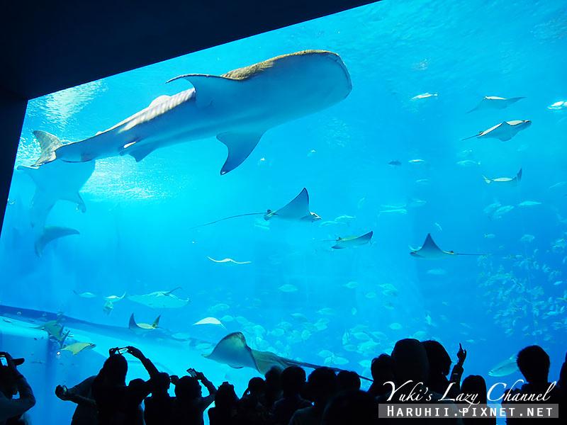 沖繩美麗海水族館沖縄美ら海水族館20