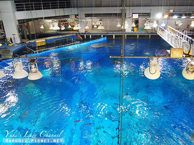 沖繩美麗海水族館沖縄美ら海水族館21