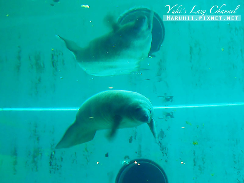 沖繩美麗海水族館沖縄美ら海水族館30