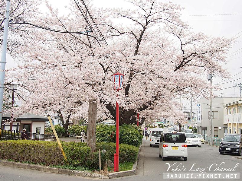 盛岡高松公園賞櫻