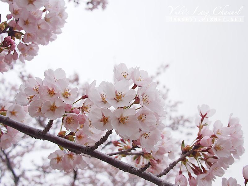 盛岡高松公園賞櫻9