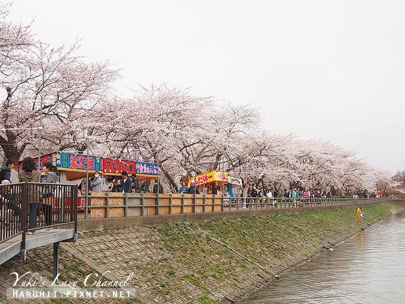 盛岡高松公園賞櫻16