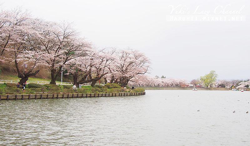 盛岡高松公園賞櫻17