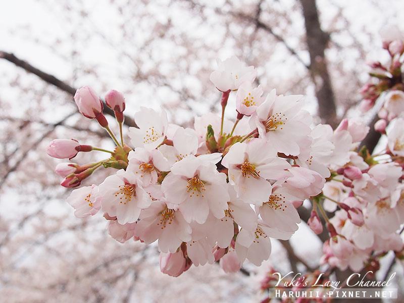 盛岡高松公園賞櫻19