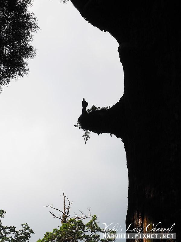 霧島神宮9