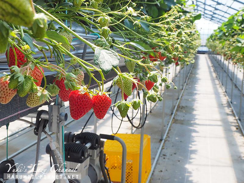 德島採草莓吃到飽3.jpg