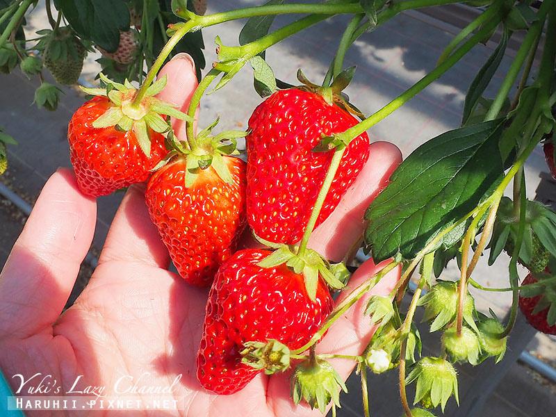 德島採草莓吃到飽4.jpg