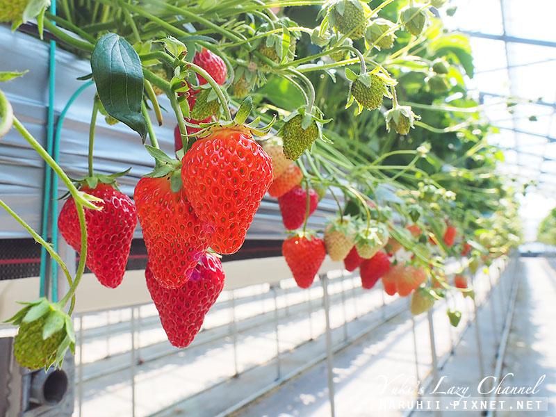 德島採草莓吃到飽5.jpg