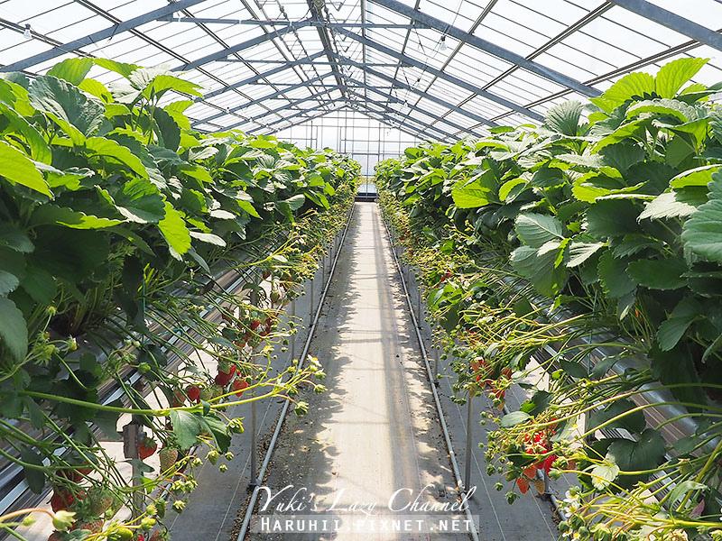 德島採草莓吃到飽6.jpg