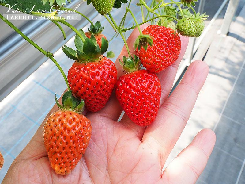 德島採草莓吃到飽9.jpg