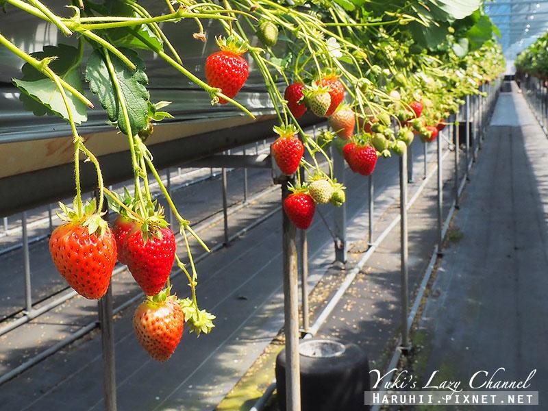 德島採草莓吃到飽11.jpg