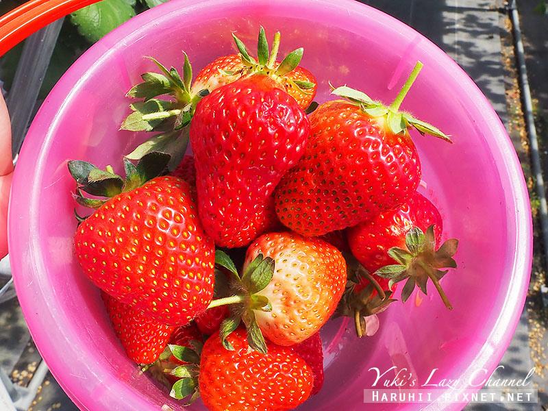 德島採草莓吃到飽12.jpg
