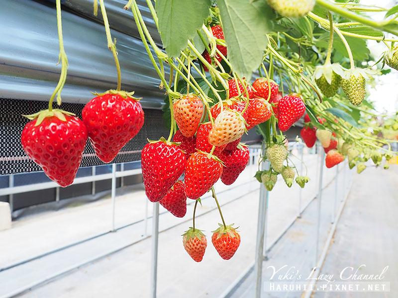 德島採草莓吃到飽14.jpg