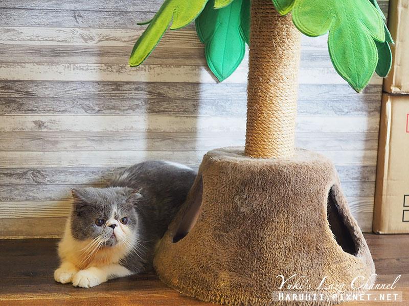 林口貓泰泰貓咪餐廳1.jpg