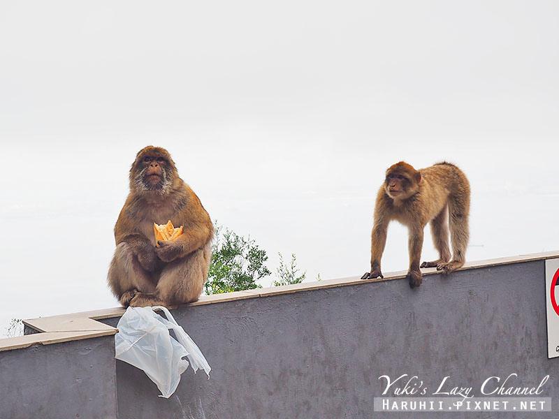直布羅陀Gibraltar25.jpg