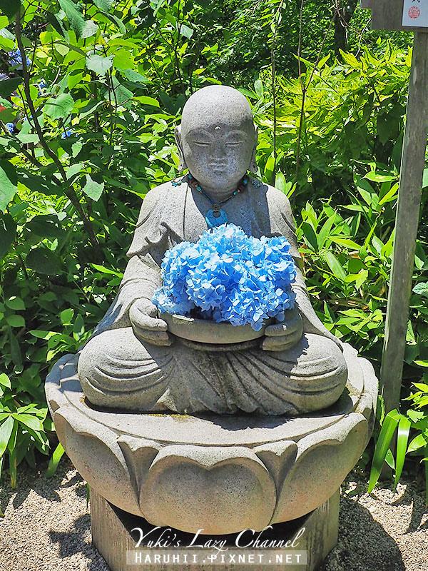 鐮倉明月院繡球花15.jpg