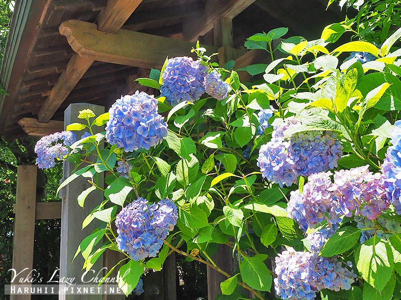 鐮倉明月院繡球花17.jpg