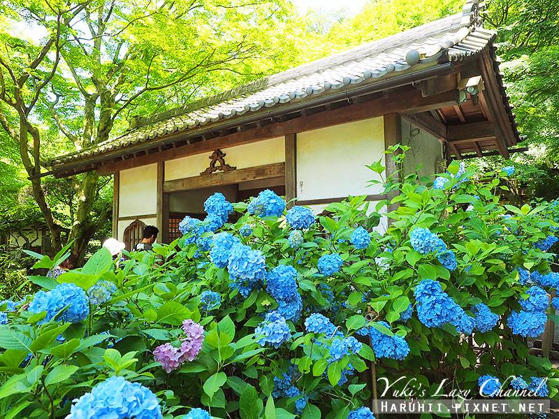 鐮倉明月院繡球花34.jpg