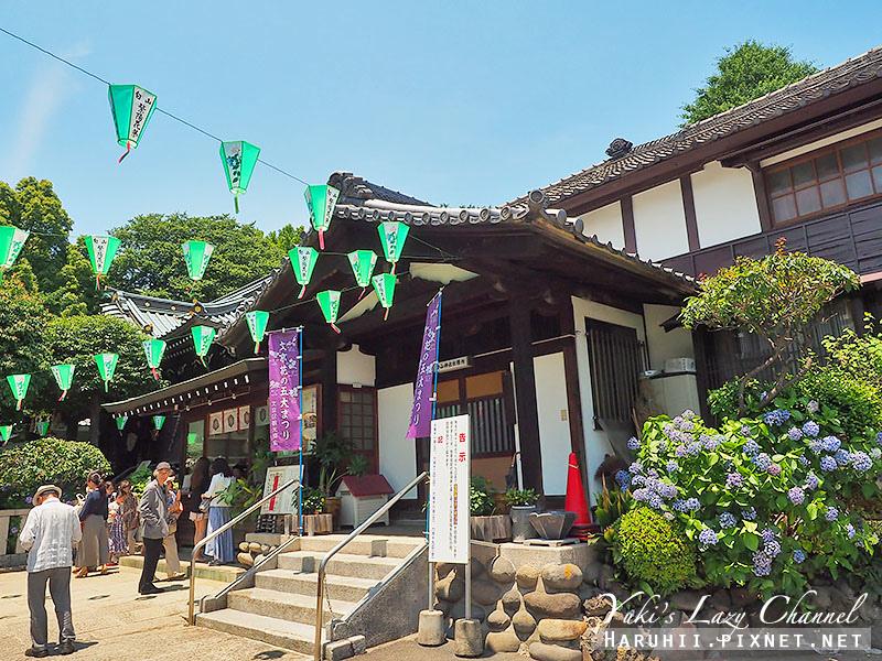 白山神社繡球花2.jpg