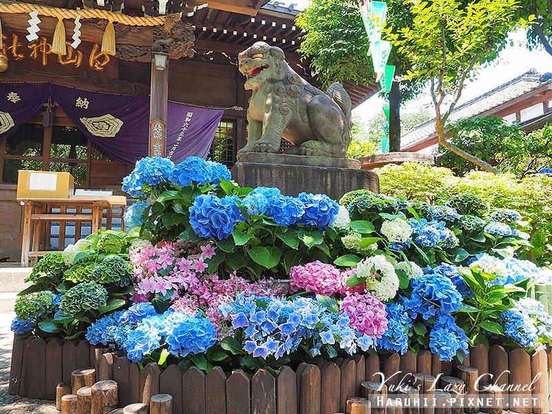 白山神社繡球花1.jpg