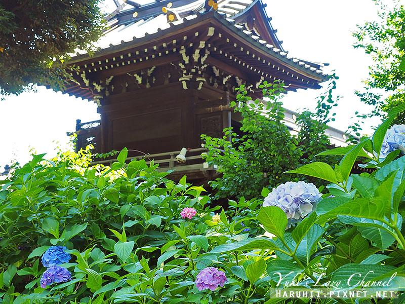白山神社繡球花7.jpg