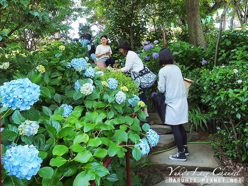 白山神社繡球花16.jpg