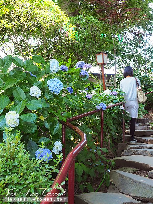 白山神社繡球花17.jpg